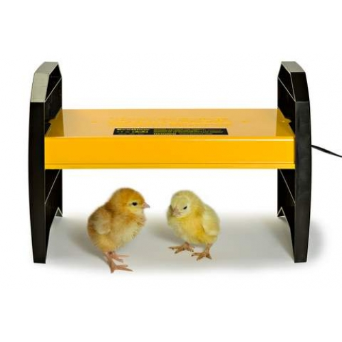 Ecoglow 20 Chick Brooder Electric Hen Cotswold Chickens