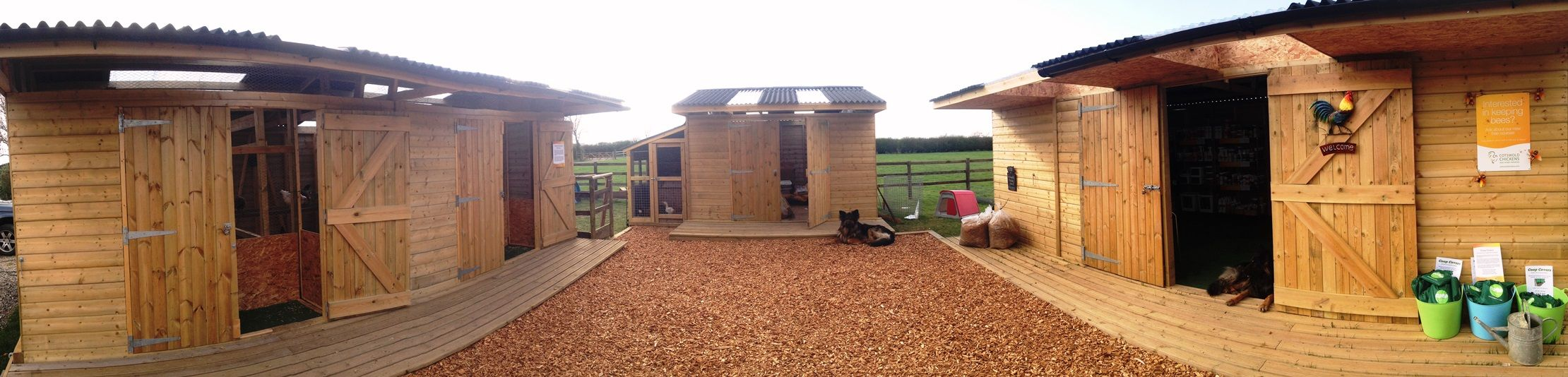 Cotswold Chickens and Home Farming - Edgehill Stud